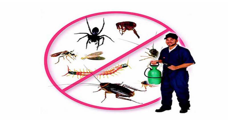 Phương pháp hóa học diệt côn trùng