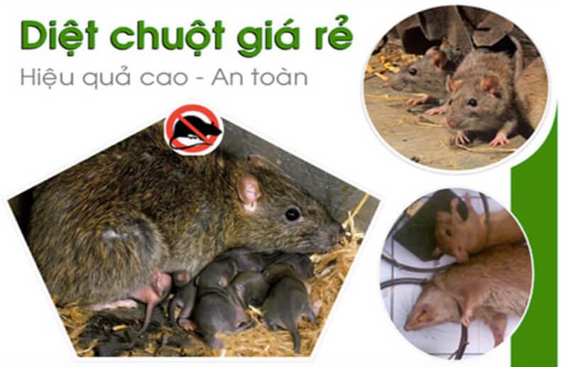 Bạn đã biết cách diệt chuột trong phòng trọ chưa?