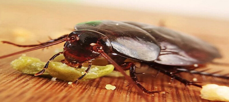 Cách diệt côn trùng tại nhà đơn giản và hiệu quả