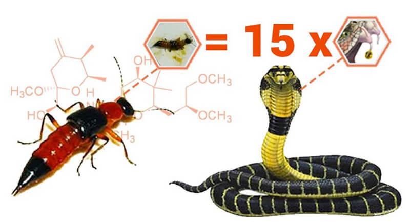 Tại sao cần phải xua đuổi và diệt kiến ba khoang