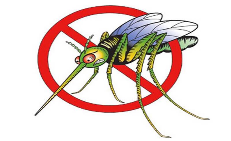 Cách diệt muỗi tại nhà đơn giản và hiệu quả cao