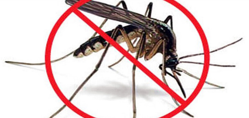 Sử dụng thuốc diệt muỗi giả khiến muỗi phát triển nhanh hơn