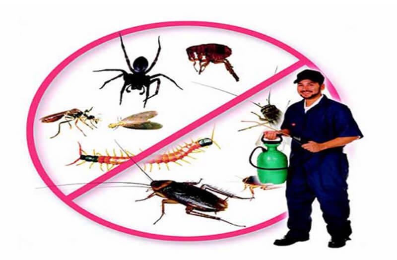 Cẩn thận với thuốc diệt muỗi giả