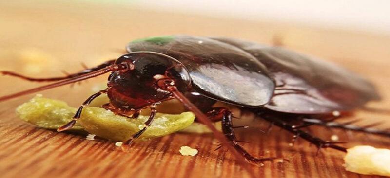 Phương pháp diệt côn trùng bằng thiên địch là như thế nào?
