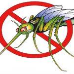 Tác hại và cách phòng ngừa khi bị côn trùng cắn